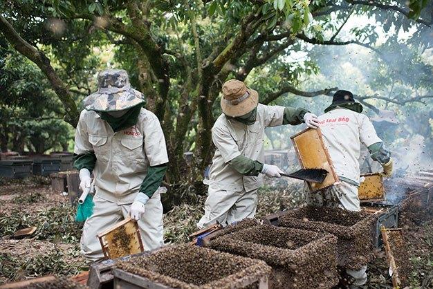 Mật ong hoa nhãn Tam Đảo