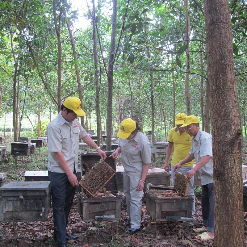 Ong Tam Đảo - Honeco trang trại mật ong keo