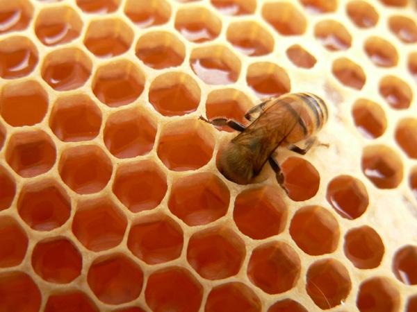 ong thợ tạo ra mật ong