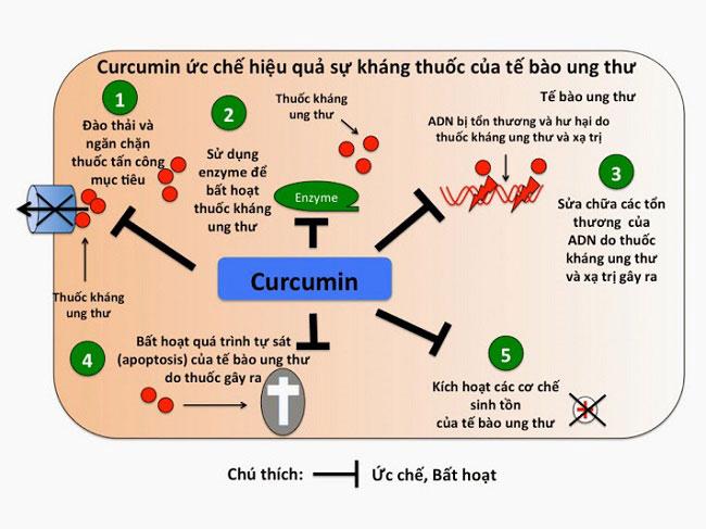 Curcmin trị ung thư