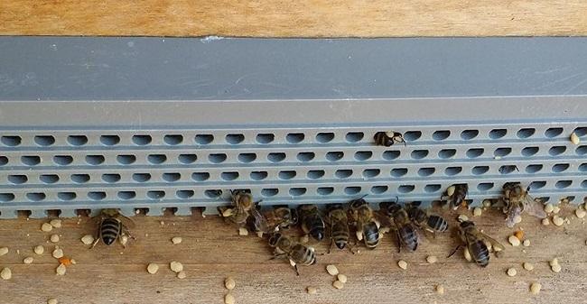 Cách lấy phấn hoa ong - Ảnh 3