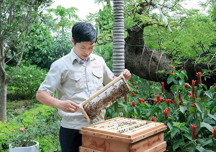 uống mật ong rừng có tác dụng gì