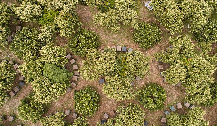Mật ong rừng nguyên chất ong tam đảo