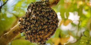 công dụng của mật ong rừng