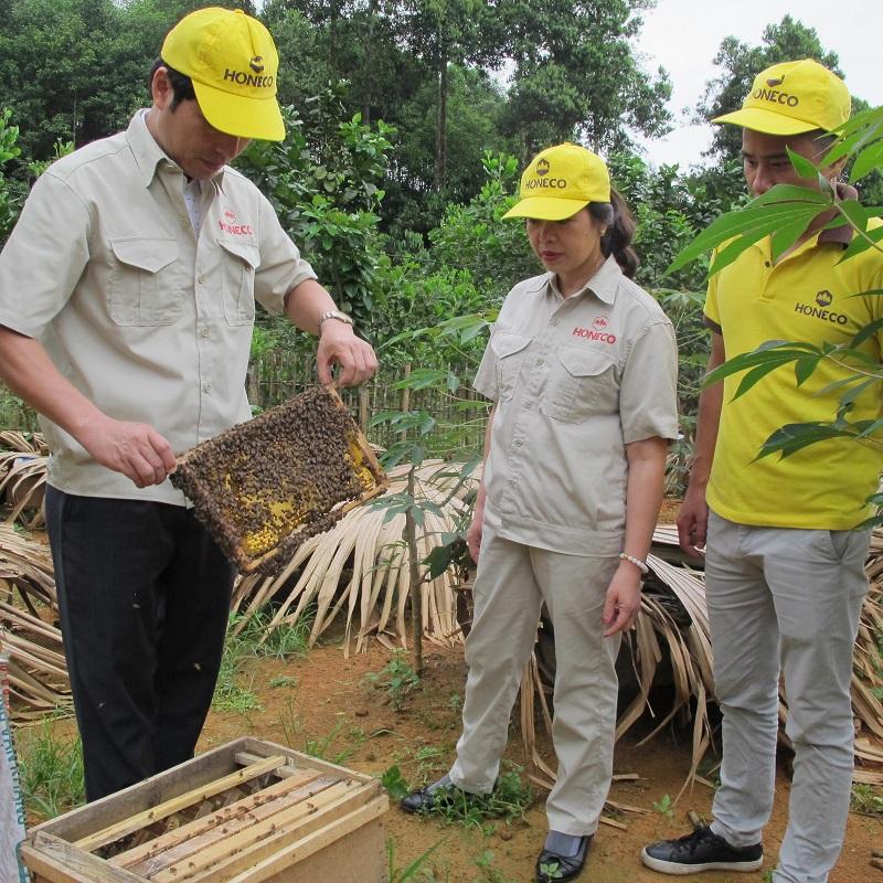 Mật ong quất Tan Đảo trang trại ong Honeco