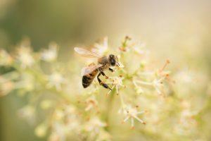 mật ong là gì mật hoa