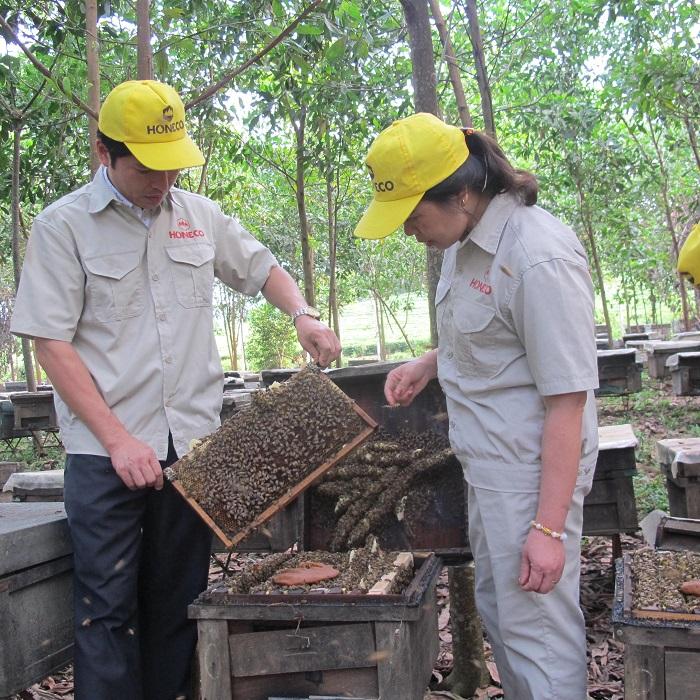 Mật ong là gì, ong hút mật từ lá