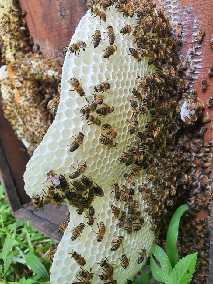 Ong tạo ra mật